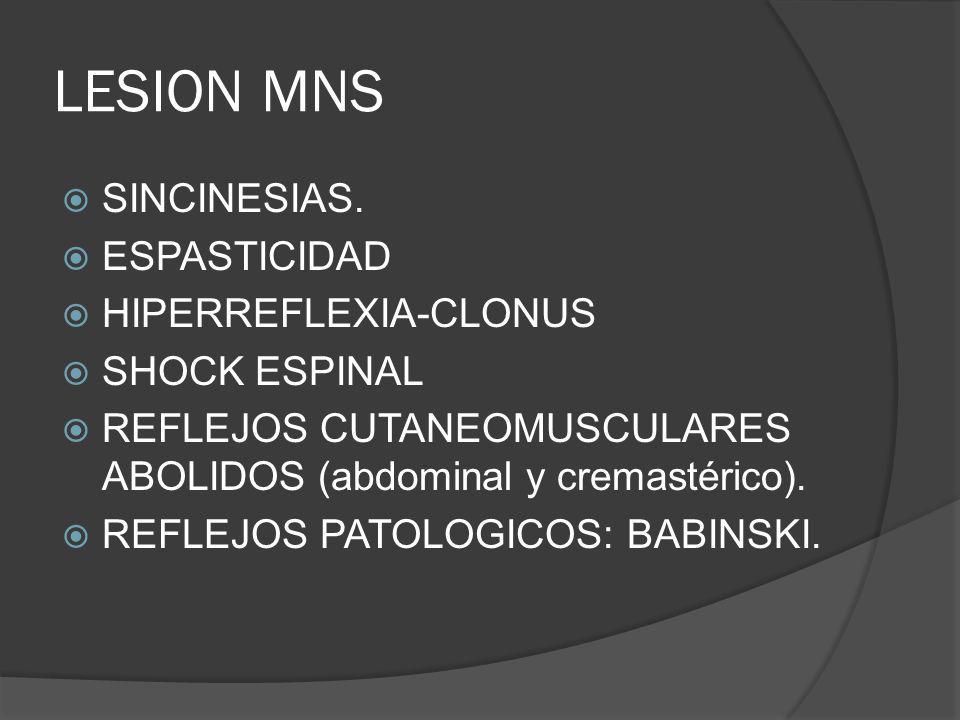 LESION MNS SINCINESIAS. ESPASTICIDAD HIPERREFLEXIA-CLONUS SHOCK ESPINAL REFLEJOS CUTANEOMUSCULARES ABOLIDOS (abdominal y cremastérico). REFLEJOS PATOL