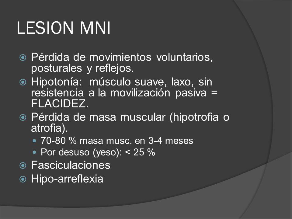 LESION MNI Pérdida de movimientos voluntarios, posturales y reflejos. Hipotonía: músculo suave, laxo, sin resistencia a la movilización pasiva = FLACI