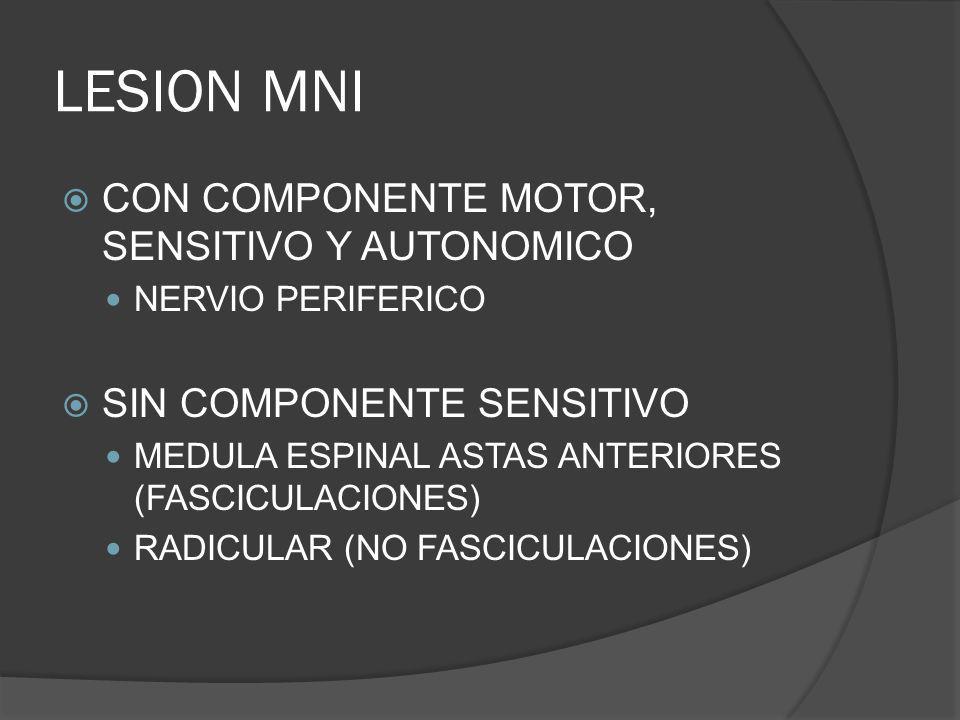 LESION MNI CON COMPONENTE MOTOR, SENSITIVO Y AUTONOMICO NERVIO PERIFERICO SIN COMPONENTE SENSITIVO MEDULA ESPINAL ASTAS ANTERIORES (FASCICULACIONES) R