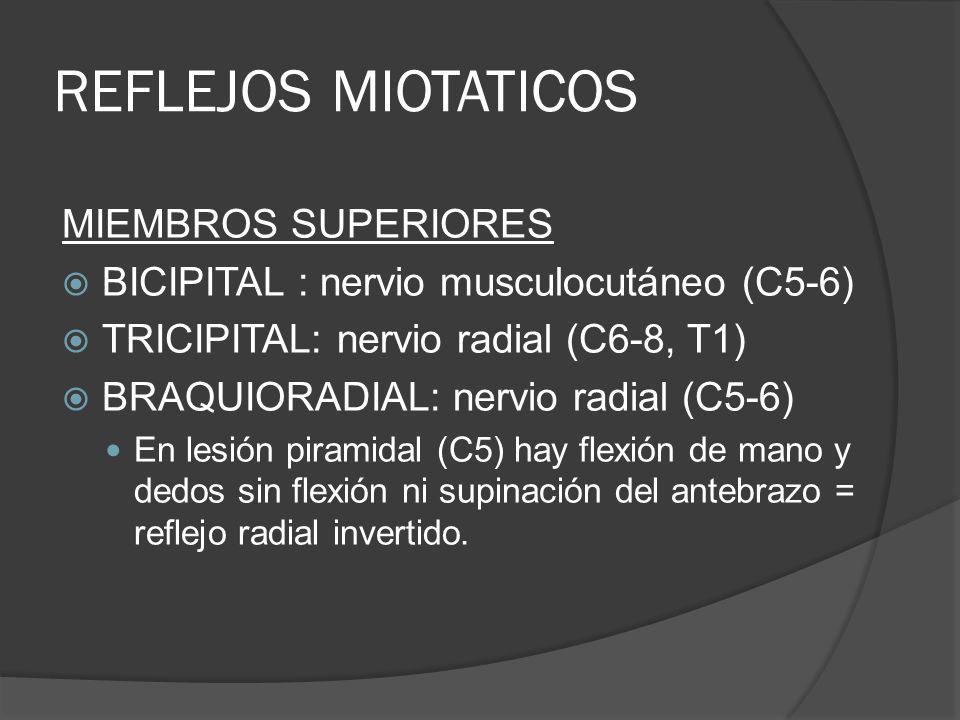 REFLEJOS MIOTATICOS MIEMBROS SUPERIORES BICIPITAL : nervio musculocutáneo (C5-6) TRICIPITAL: nervio radial (C6-8, T1) BRAQUIORADIAL: nervio radial (C5