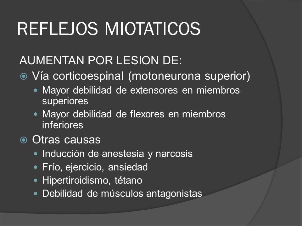 REFLEJOS MIOTATICOS AUMENTAN POR LESION DE: Vía corticoespinal (motoneurona superior) Mayor debilidad de extensores en miembros superiores Mayor debil