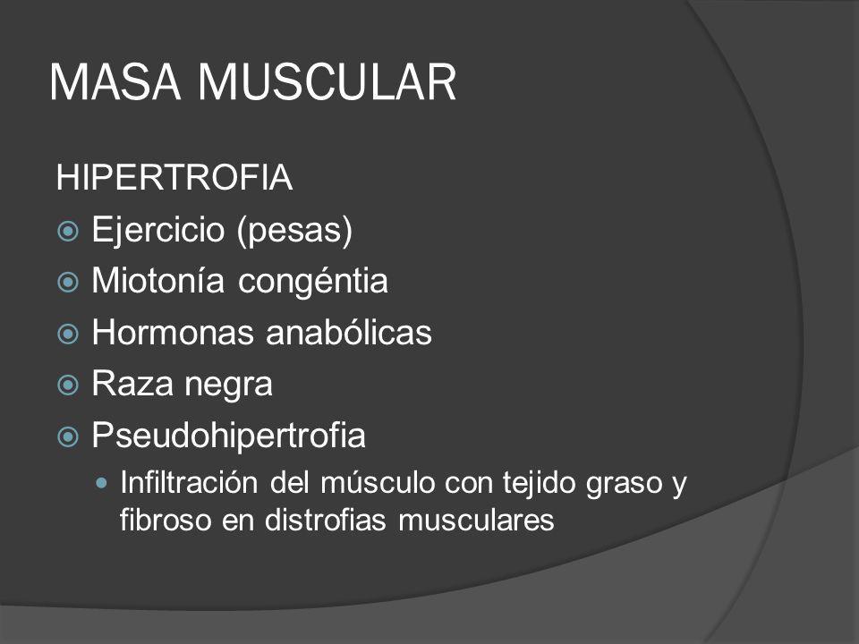 MASA MUSCULAR HIPERTROFIA Ejercicio (pesas) Miotonía congéntia Hormonas anabólicas Raza negra Pseudohipertrofia Infiltración del músculo con tejido gr