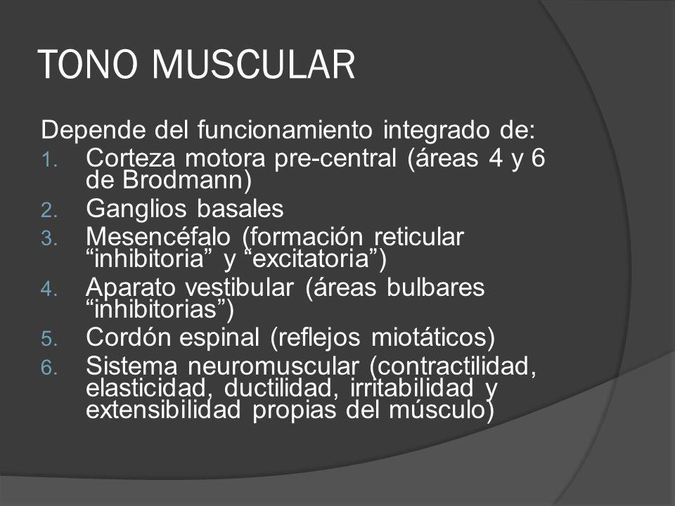 TONO MUSCULAR Depende del funcionamiento integrado de: 1. Corteza motora pre-central (áreas 4 y 6 de Brodmann) 2. Ganglios basales 3. Mesencéfalo (for