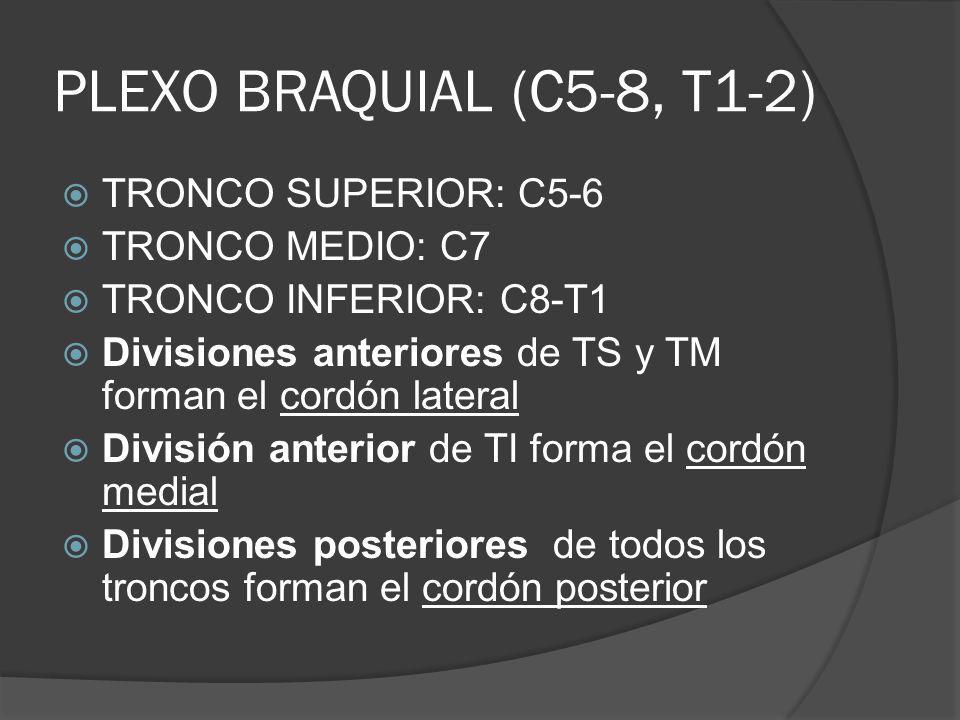 PLEXO BRAQUIAL (C5-8, T1-2) TRONCO SUPERIOR: C5-6 TRONCO MEDIO: C7 TRONCO INFERIOR: C8-T1 Divisiones anteriores de TS y TM forman el cordón lateral Di