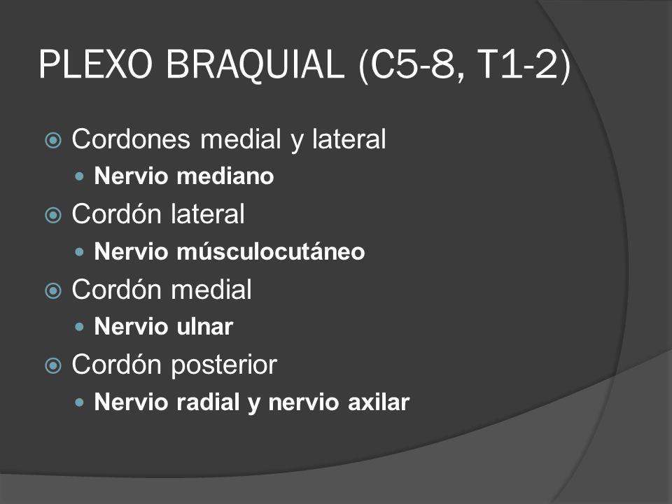 PLEXO BRAQUIAL (C5-8, T1-2) Cordones medial y lateral Nervio mediano Cordón lateral Nervio músculocutáneo Cordón medial Nervio ulnar Cordón posterior