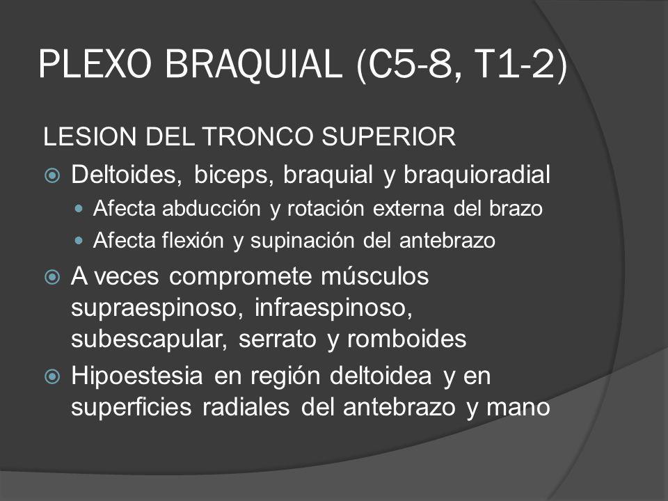 PLEXO BRAQUIAL (C5-8, T1-2) LESION DEL TRONCO SUPERIOR Deltoides, biceps, braquial y braquioradial Afecta abducción y rotación externa del brazo Afect