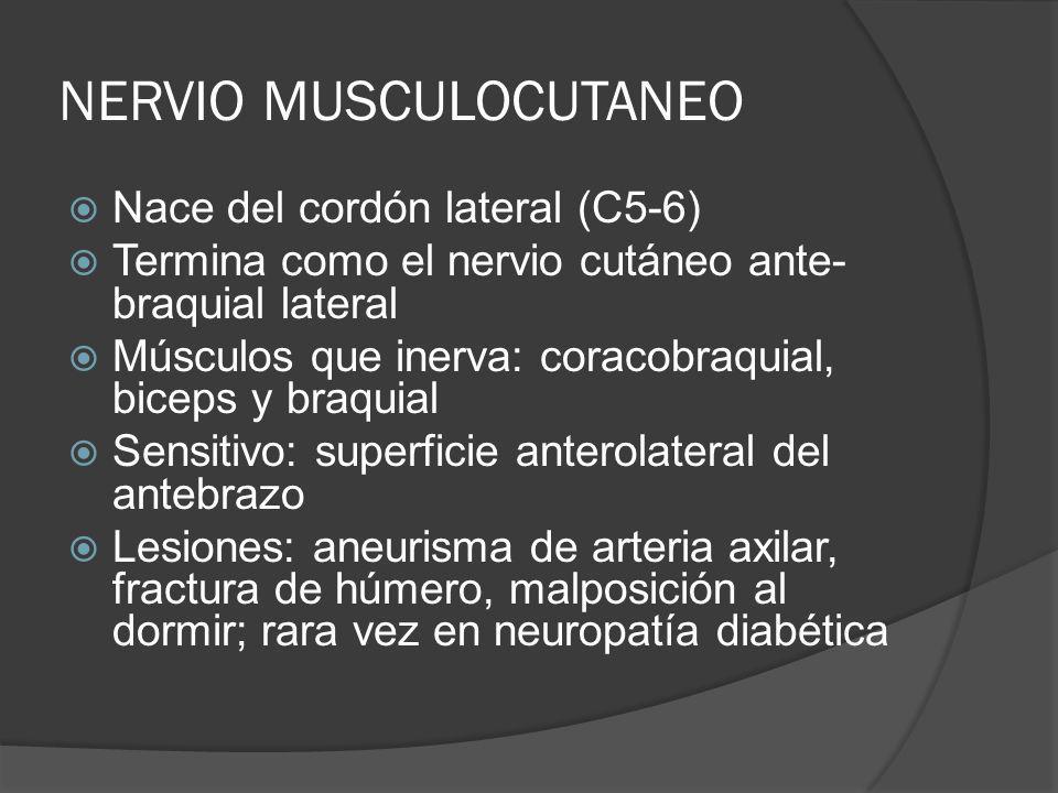 NERVIO MUSCULOCUTANEO Nace del cordón lateral (C5-6) Termina como el nervio cutáneo ante- braquial lateral Músculos que inerva: coracobraquial, biceps