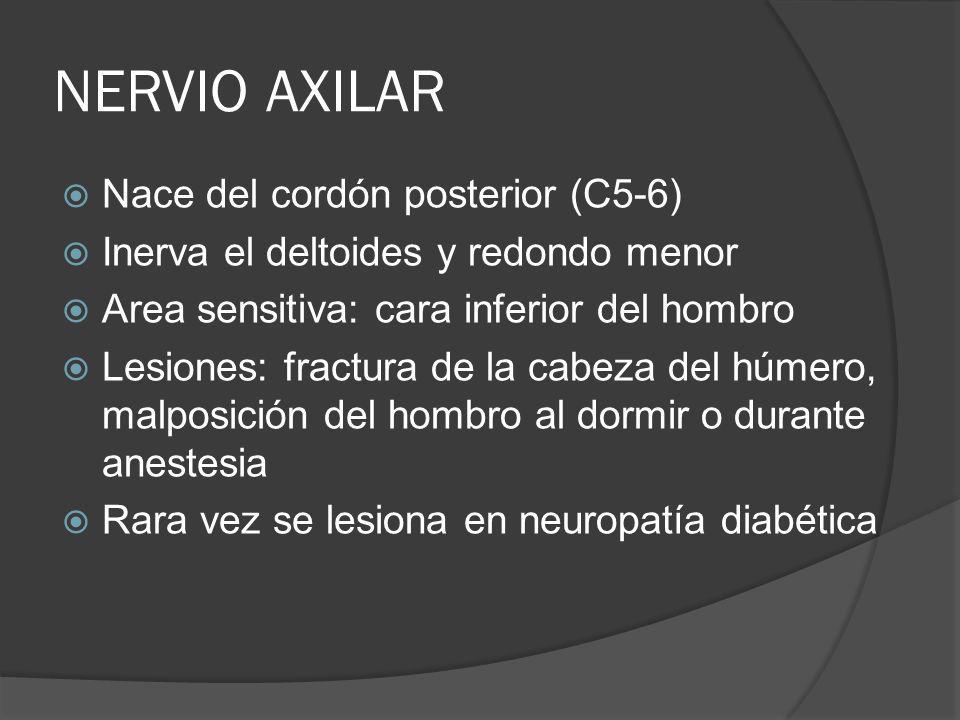 NERVIO AXILAR Nace del cordón posterior (C5-6) Inerva el deltoides y redondo menor Area sensitiva: cara inferior del hombro Lesiones: fractura de la c