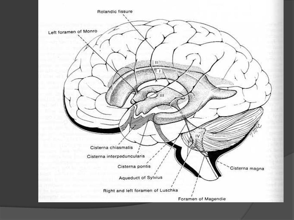 MOTONEURONA INFERIOR Neuronas alfa de ASTAS ANTERIORES de la médula espinal.