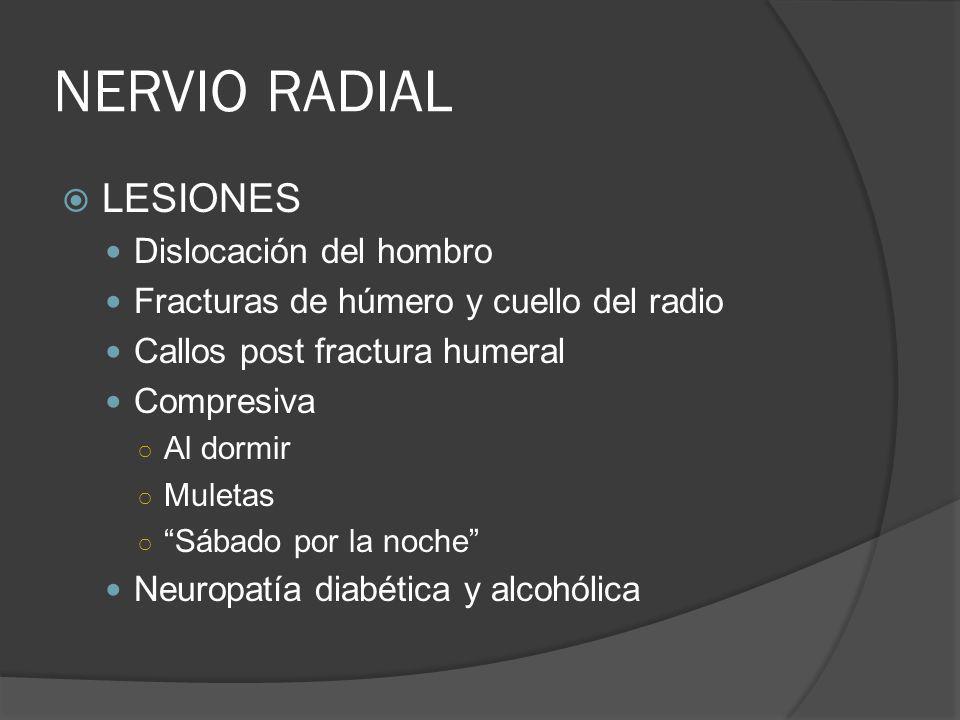 NERVIO RADIAL LESIONES Dislocación del hombro Fracturas de húmero y cuello del radio Callos post fractura humeral Compresiva Al dormir Muletas Sábado