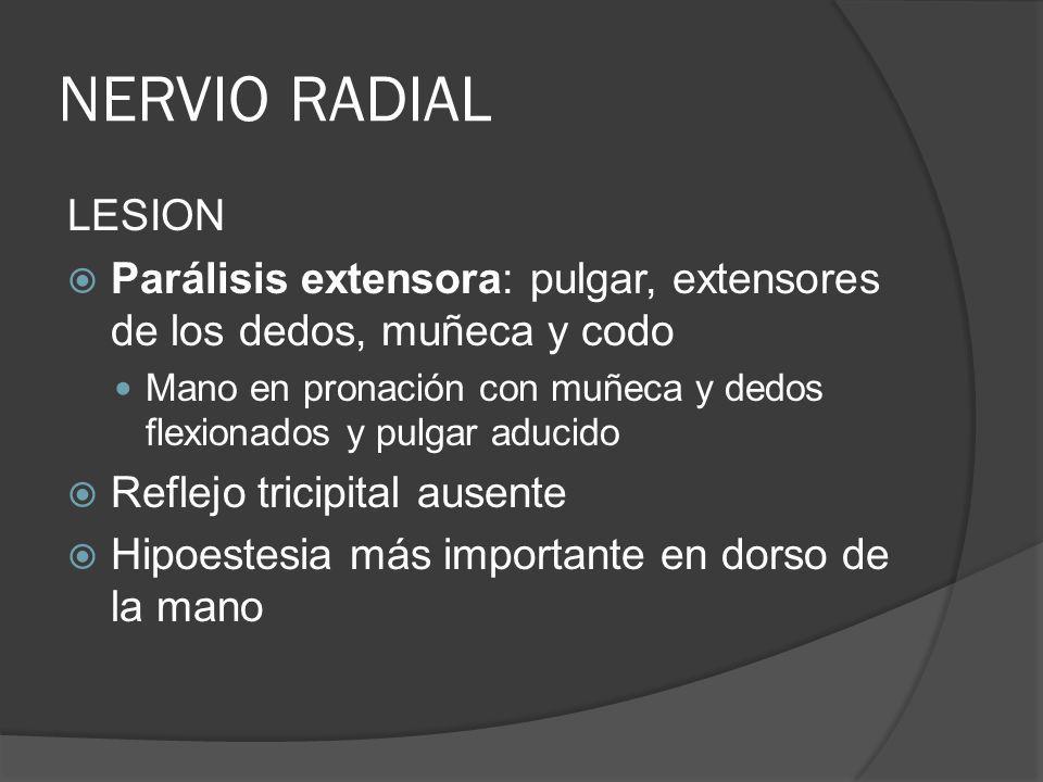 NERVIO RADIAL LESION Parálisis extensora: pulgar, extensores de los dedos, muñeca y codo Mano en pronación con muñeca y dedos flexionados y pulgar adu