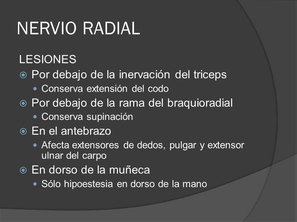NERVIO RADIAL LESIONES Por debajo de la inervación del triceps Conserva extensión del codo Por debajo de la rama del braquioradial Conserva supinación