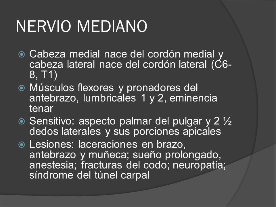 NERVIO MEDIANO Cabeza medial nace del cordón medial y cabeza lateral nace del cordón lateral (C6- 8, T1) Músculos flexores y pronadores del antebrazo,