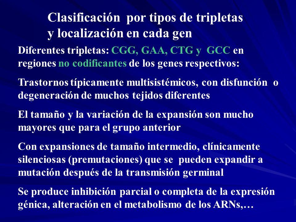 Clasificación por tipos de tripletas y localización en cada gen Diferentes tripletas: CGG, GAA, CTG y GCC en regiones no codificantes de los genes res