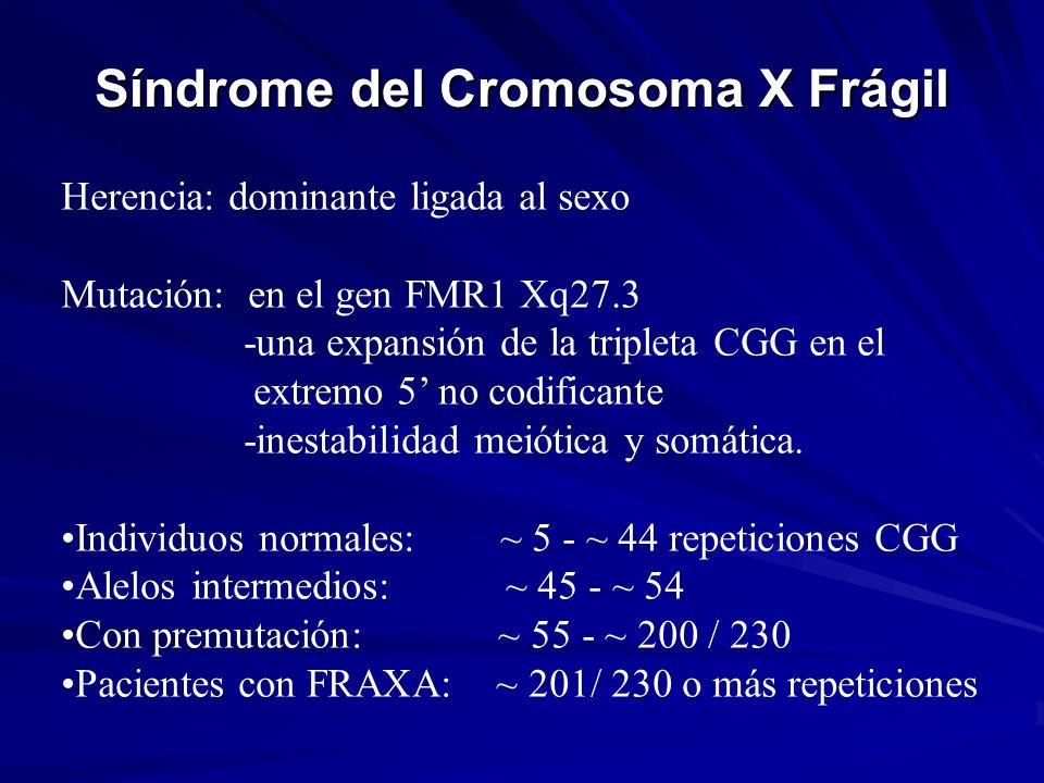 Síndrome del Cromosoma X Frágil Herencia: dominante ligada al sexo Mutación: en el gen FMR1 Xq27.3 -una expansión de la tripleta CGG en el extremo 5 n