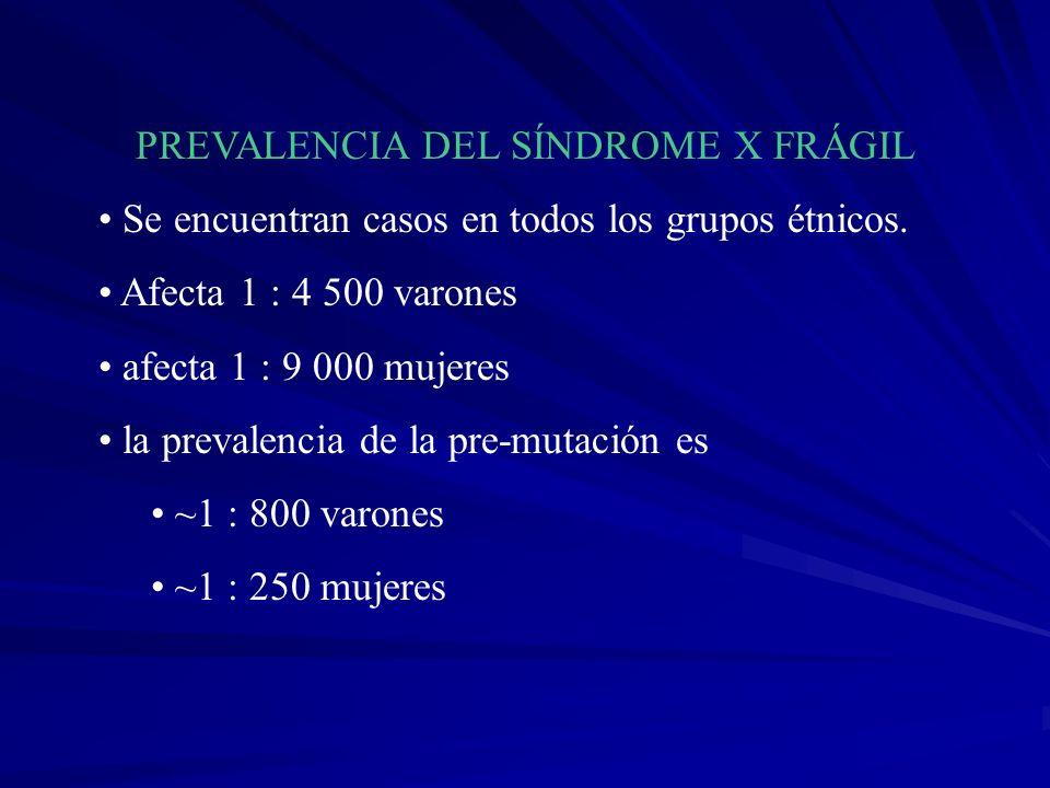 PREVALENCIA DEL SÍNDROME X FRÁGIL Se encuentran casos en todos los grupos étnicos. Afecta 1 : 4 500 varones afecta 1 : 9 000 mujeres la prevalencia de