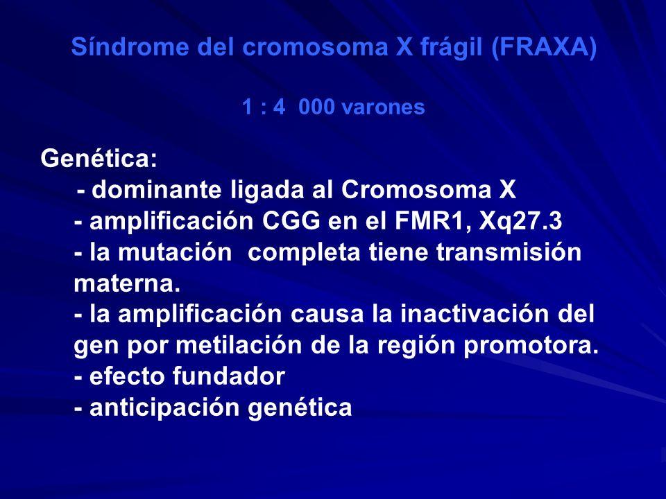 Síndrome del cromosoma X frágil (FRAXA) 1 : 4 000 varones Genética: - dominante ligada al Cromosoma X - amplificación CGG en el FMR1, Xq27.3 - la muta