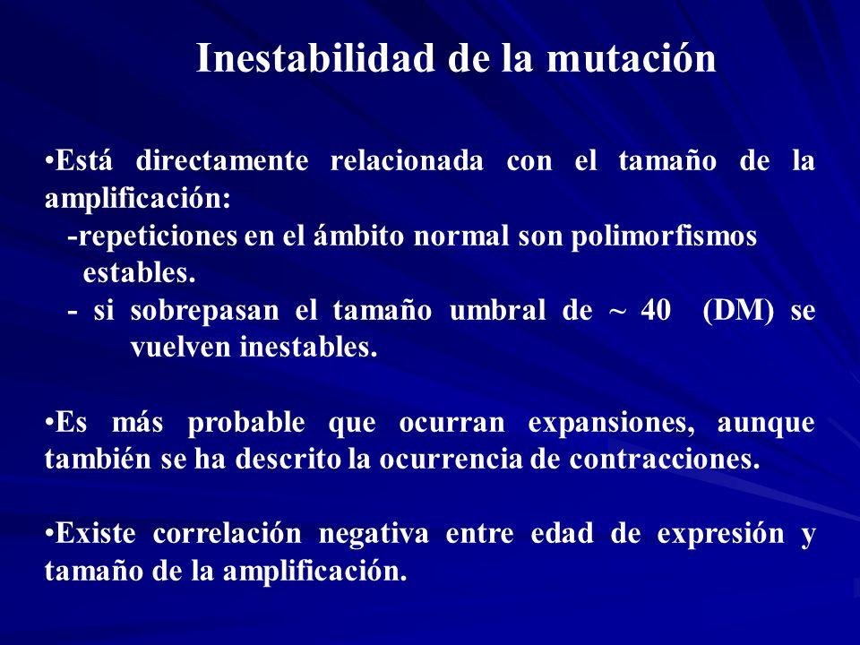 Inestabilidad de la mutación Está directamente relacionada con el tamaño de la amplificación: -repeticiones en el ámbito normal son polimorfismos esta