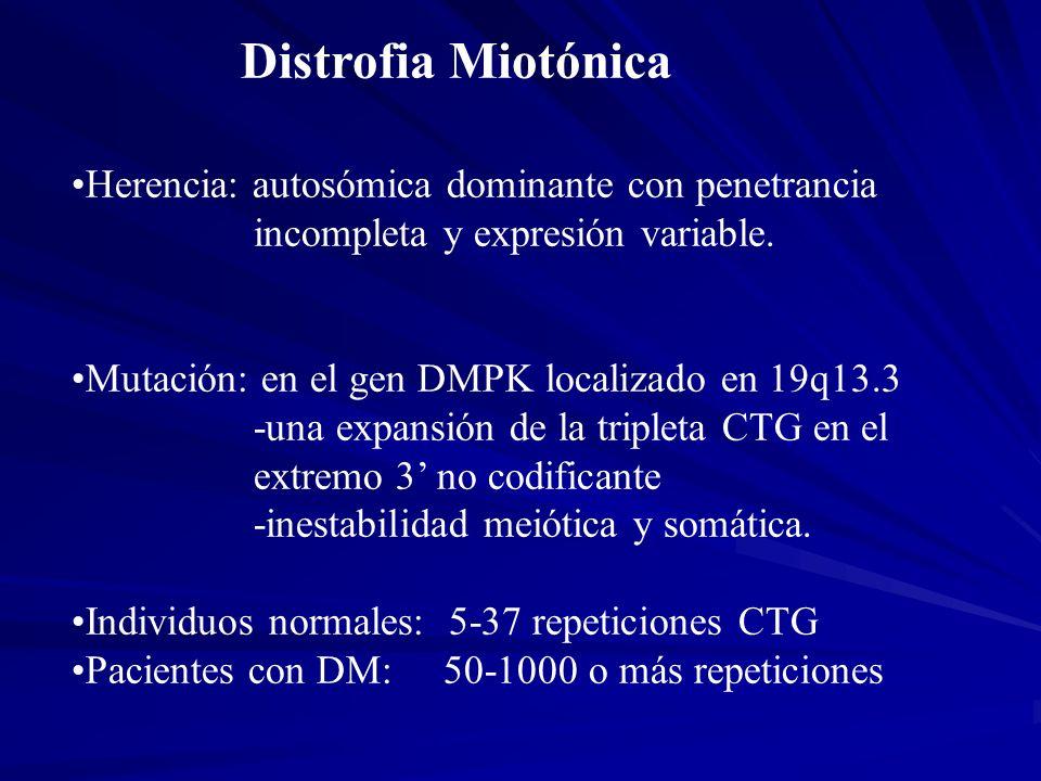 Distrofia Miotónica Herencia: autosómica dominante con penetrancia incompleta y expresión variable. Mutación: en el gen DMPK localizado en 19q13.3 -un