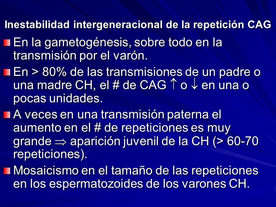 Inestabilidad intergeneracional de la repetición CAG En la gametogénesis, sobre todo en la transmisión por el varón. En > 80% de las transmisiones de
