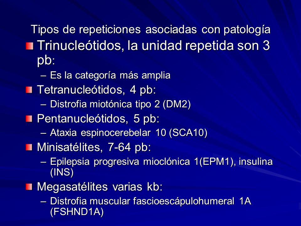 Tipos de repeticiones asociadas con patología Trinucleótidos, la unidad repetida son 3 pb : –Es la categoría más amplia Tetranucleótidos, 4 pb: –Distr