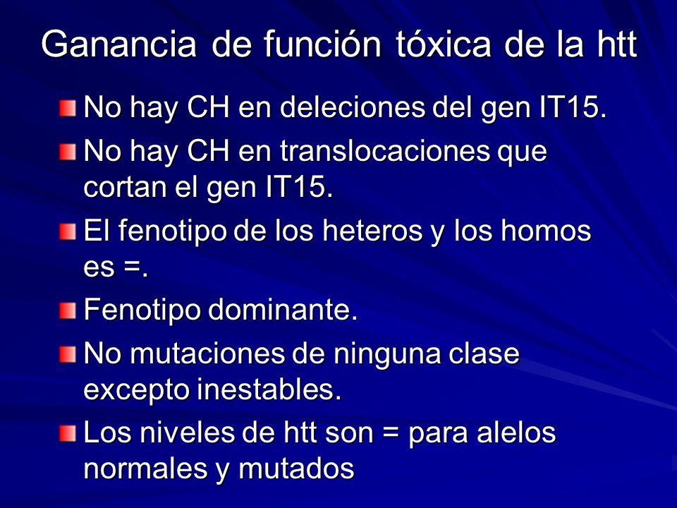 Ganancia de función tóxica de la htt No hay CH en deleciones del gen IT15. No hay CH en translocaciones que cortan el gen IT15. El fenotipo de los het