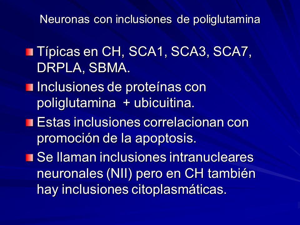 Neuronas con inclusiones de poliglutamina Típicas en CH, SCA1, SCA3, SCA7, DRPLA, SBMA. Inclusiones de proteínas con poliglutamina + ubicuitina. Estas