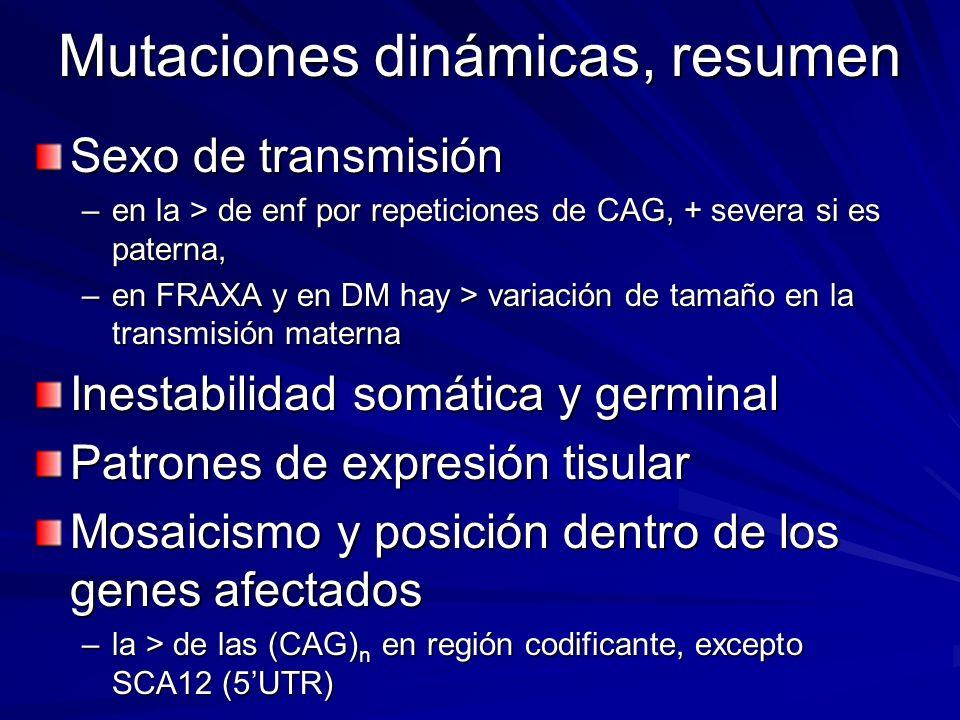 Mutaciones dinámicas, resumen Sexo de transmisión –en la > de enf por repeticiones de CAG, + severa si es paterna, –en FRAXA y en DM hay > variación d