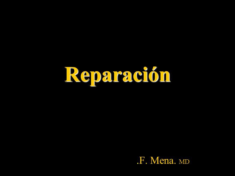 Reparación Sustitución de células muertas o dañadas por células sanas