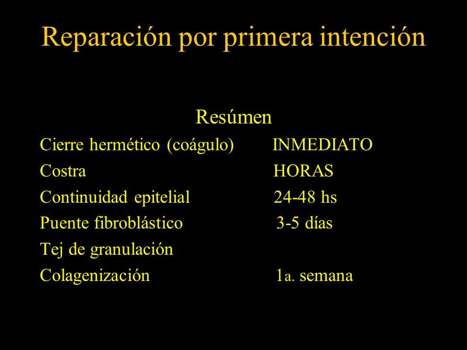 Reparación por primera intención Resúmen Cierre hermético (coágulo) INMEDIATO Costra HORAS Continuidad epitelial 24-48 hs Puente fibroblástico 3-5 día