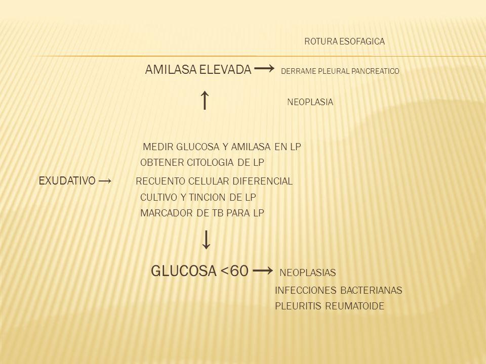 ROTURA ESOFAGICA AMILASA ELEVADA DERRAME PLEURAL PANCREATICO NEOPLASIA MEDIR GLUCOSA Y AMILASA EN LP OBTENER CITOLOGIA DE LP EXUDATIVO RECUENTO CELULA