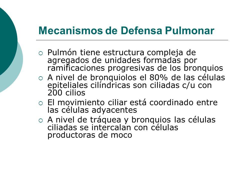 Mecanismos de Defensa Pulmonar Paredes alveolares se componen de endotelio capilar con líquido de revestimiento epitelial con presencia de macrófagos e inmunoglobulinas que pueden opsonizar o incluso en caso de activación del complemento destruir patógenos microbianos La vía respiratoria inferior es estéril por funciones de filtrado y eliminación Partículas > de 10 micras se filtran en mucosa nasal y de 2 a 10 micras se atrapan en orofaringe, sólo < 2 alcanzan los alveolos