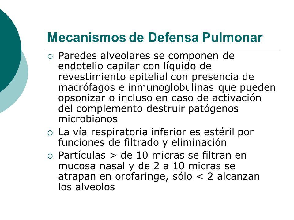 Mecanismos de Defensa Pulmonar Paredes alveolares se componen de endotelio capilar con líquido de revestimiento epitelial con presencia de macrófagos