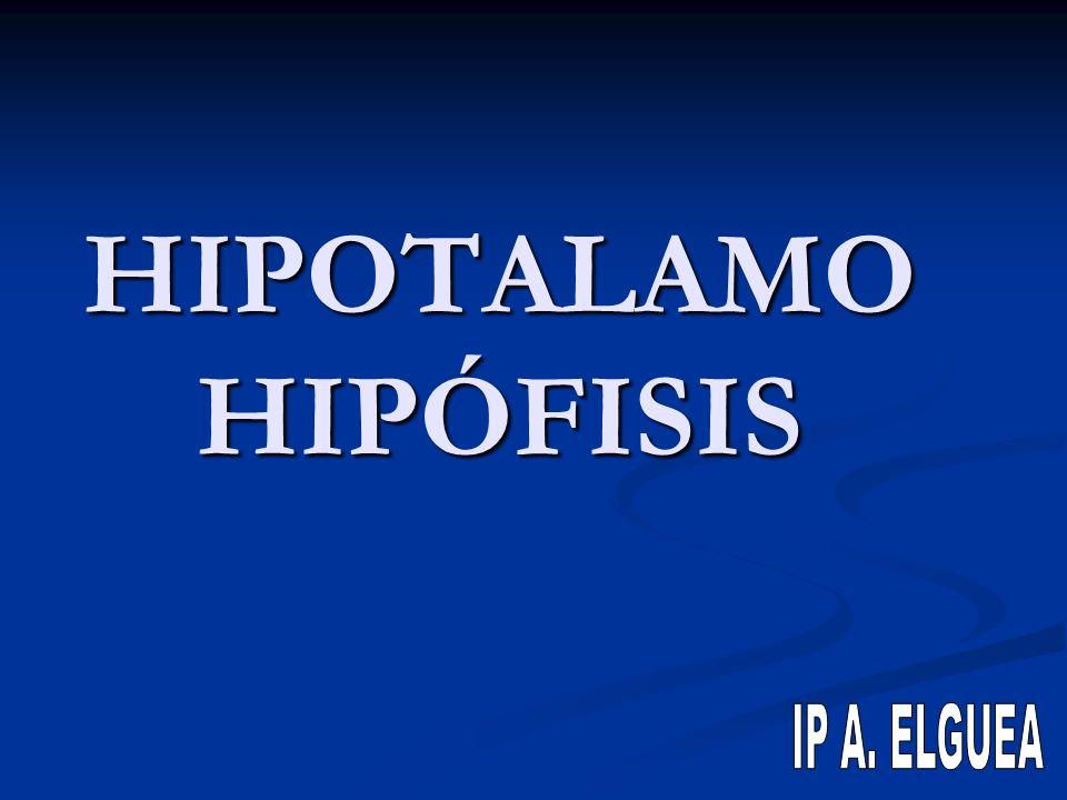 HIPOTALAMO HIPÓFISIS