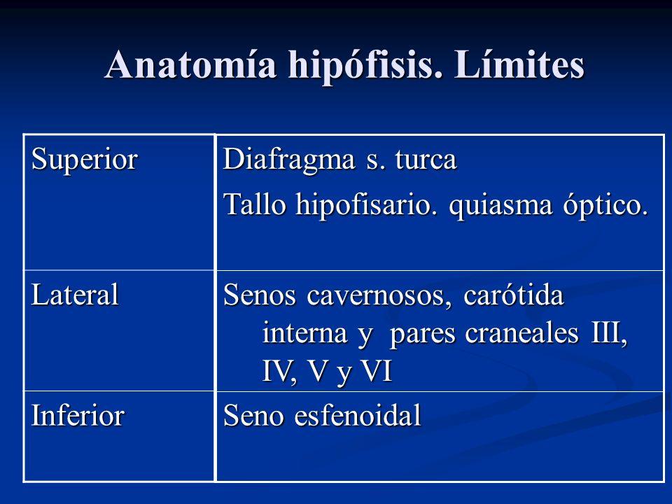 Anatomía hipófisis.