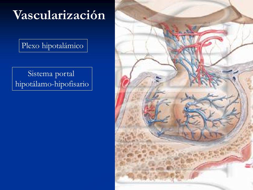 Adenohipófisis Neurohipófisis