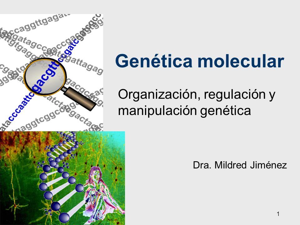 1 Genética molecular Organización, regulación y manipulación genética Dra. Mildred Jiménez