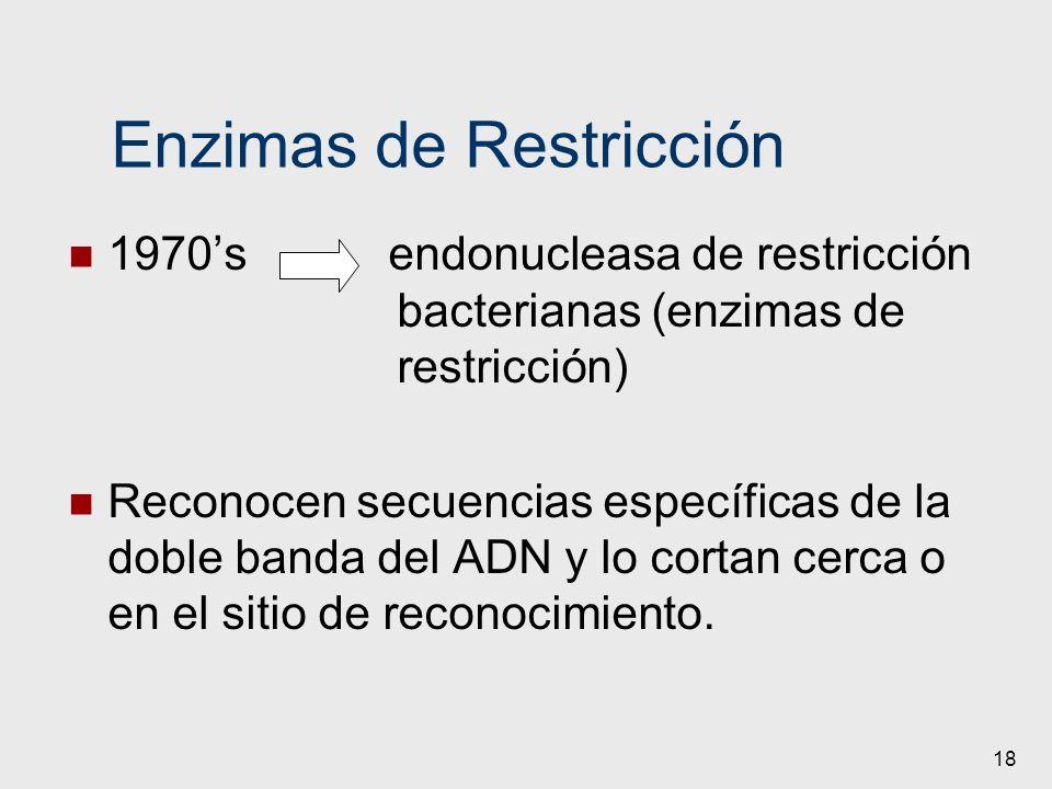 18 Enzimas de Restricción 1970s endonucleasa de restricción bacterianas (enzimas de restricción) Reconocen secuencias específicas de la doble banda de