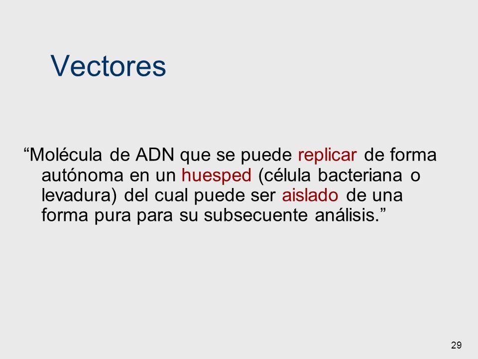 29 Vectores Molécula de ADN que se puede replicar de forma autónoma en un huesped (célula bacteriana o levadura) del cual puede ser aislado de una for