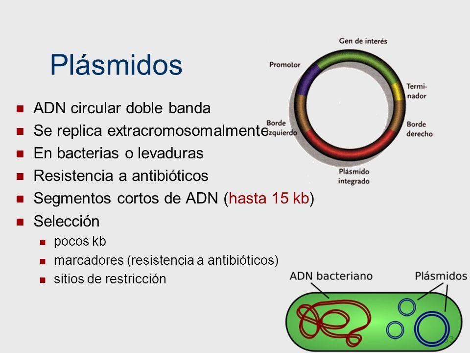33 Plásmidos ADN circular doble banda Se replica extracromosomalmente En bacterias o levaduras Resistencia a antibióticos Segmentos cortos de ADN (has