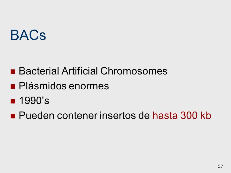 37 BACs Bacterial Artificial Chromosomes Plásmidos enormes 1990s Pueden contener insertos de hasta 300 kb