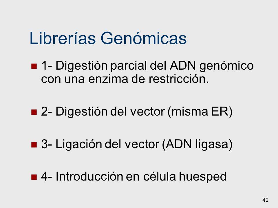 42 Librerías Genómicas 1- Digestión parcial del ADN genómico con una enzima de restricción. 2- Digestión del vector (misma ER) 3- Ligación del vector