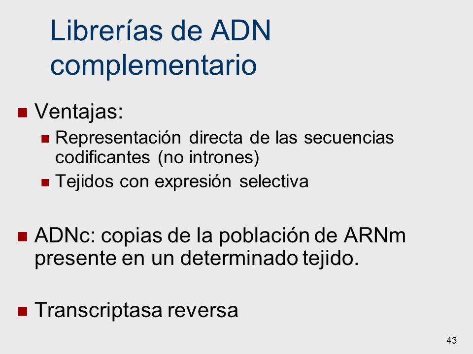 43 Librerías de ADN complementario Ventajas: Representación directa de las secuencias codificantes (no intrones) Tejidos con expresión selectiva ADNc: