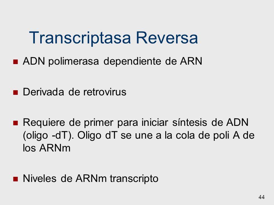 44 Transcriptasa Reversa ADN polimerasa dependiente de ARN Derivada de retrovirus Requiere de primer para iniciar síntesis de ADN (oligo -dT). Oligo d