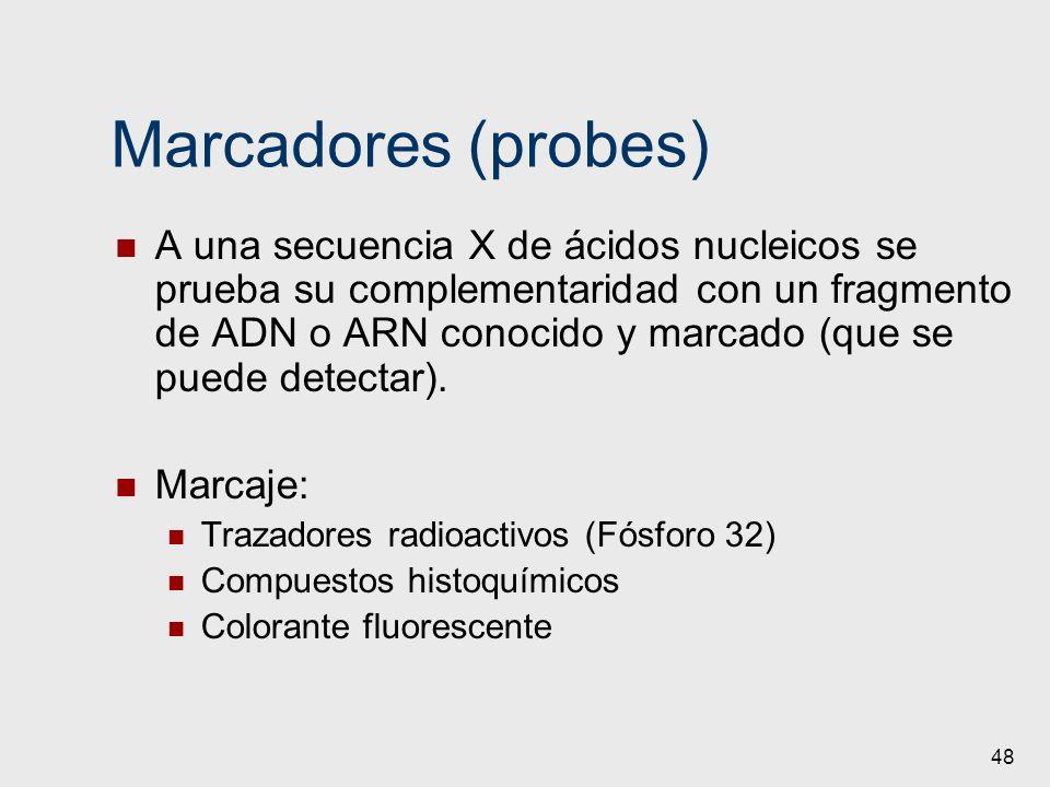 48 Marcadores (probes) A una secuencia X de ácidos nucleicos se prueba su complementaridad con un fragmento de ADN o ARN conocido y marcado (que se pu