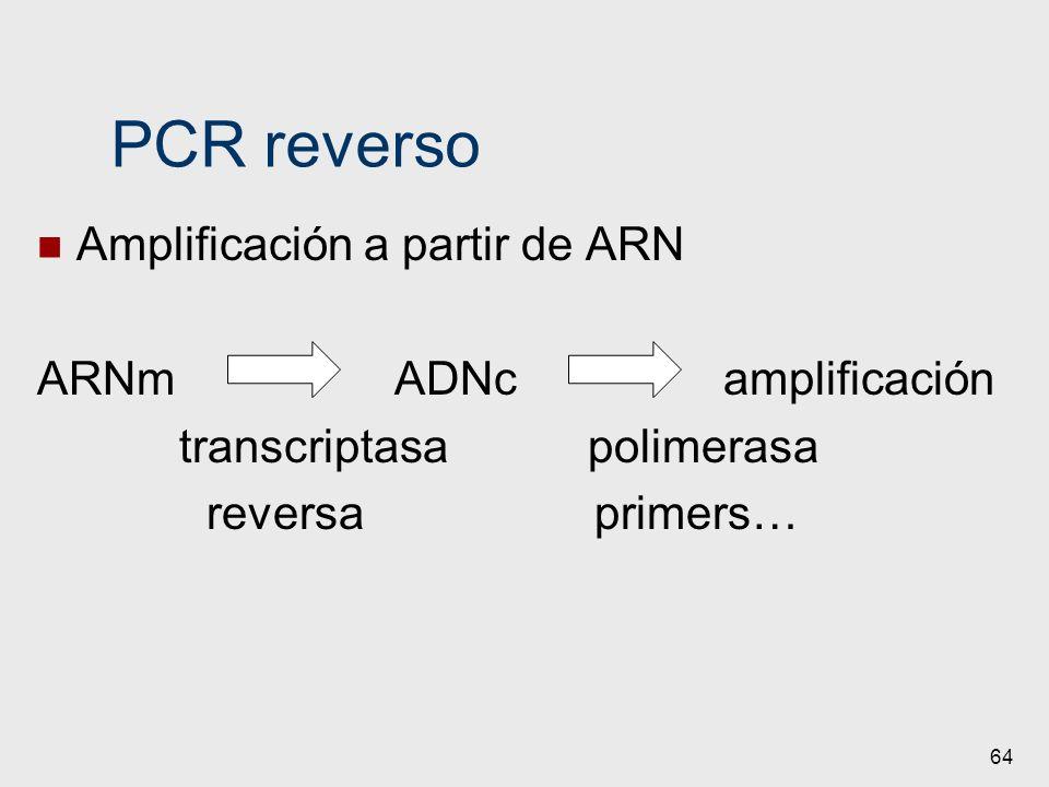 64 PCR reverso Amplificación a partir de ARN ARNm ADNc amplificación transcriptasa polimerasa reversa primers…