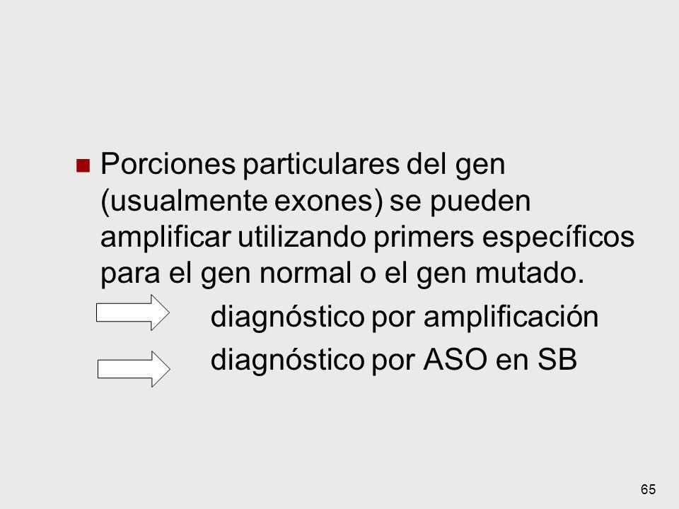 65 Porciones particulares del gen (usualmente exones) se pueden amplificar utilizando primers específicos para el gen normal o el gen mutado. diagnóst