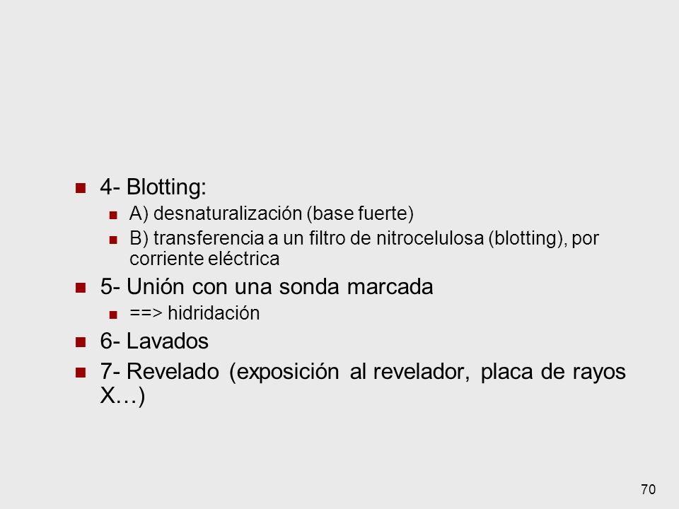 70 4- Blotting: A) desnaturalización (base fuerte) B) transferencia a un filtro de nitrocelulosa (blotting), por corriente eléctrica 5- Unión con una