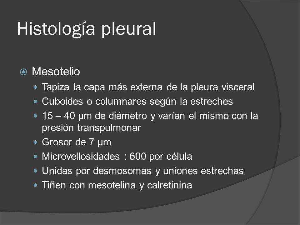 Histología pleural Mesotelio Tapiza la capa más externa de la pleura visceral Cuboides o columnares según la estreches 15 – 40 µm de diámetro y varían
