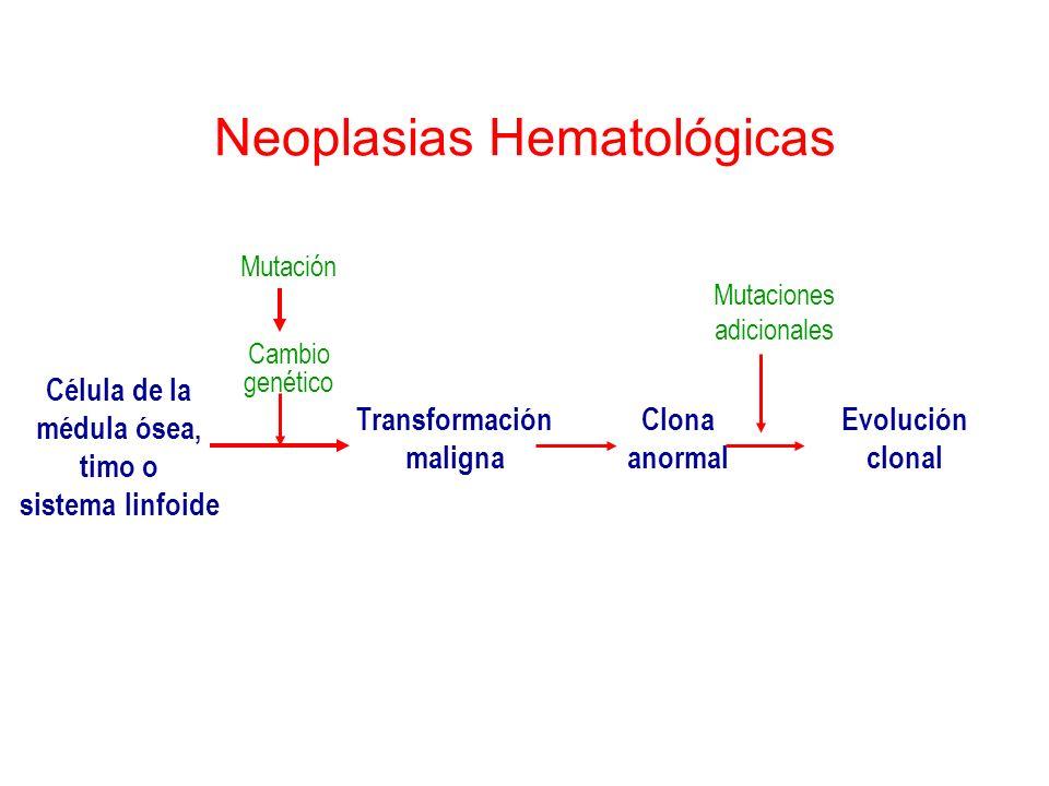 Neoplasias Hematológicas Célula de la médula ósea, timo o sistema linfoide Mutación Cambio genético Transformación maligna Clona anormal Evolución clo